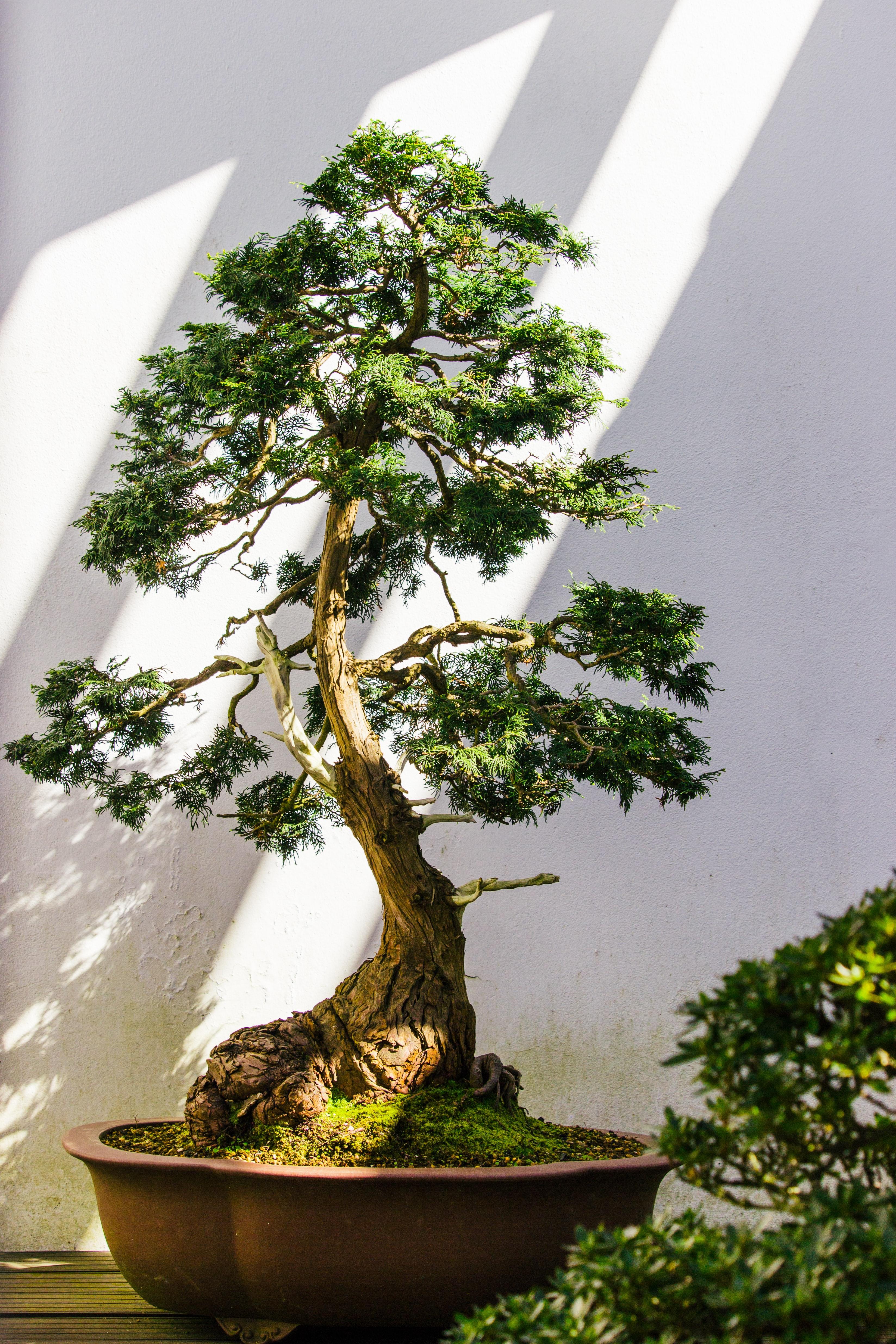 להמיר רשימה מקושרת ממוינת לעץ חיפוש בינארי